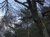 2011_04_09-te-sturmschaden-radweg-hp-14