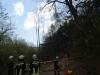 2011_04_09-sturmschaden-helenental-ff-siegenfeld-c-claus-boswart-03