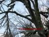 2011_04_09-sturmschaden-helenental-ff-siegenfeld-c-claus-boswart-16