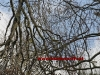 2011_04_09-sturmschaden-helenental-ff-siegenfeld-c-claus-boswart-17