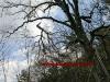 2011_04_09-sturmschaden-helenental-ff-siegenfeld-c-claus-boswart-18