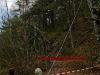 2011_04_09-sturmschaden-helenental-ff-siegenfeld-c-claus-boswart-19