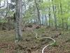2013_04_27-waldbrand-soosser-lindkogl-07