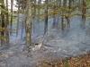 2013_04_27-waldbrand-soosser-lindkogl-09