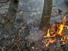 2013_04_27-waldbrand-soosser-lindkogl-19